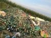 碎玻璃,白瓶料,杂绿瓶料