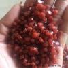 红色PVC软料颗粒(不发泡的)