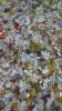 5-20最新:PP瓶盖粉碎料,PVC卡片,PCTG瓶子粉碎料,汽车杂料,进口欧美期货供应