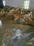 求购线路板厂退锡水,喷锡厂油锡,废助焊剂,黄油,黑油,电镀厂废锡泥,电镀液,锡电解废水,铁针铜针退锡泥,池㡳泥,电子厂焊锡渣