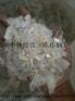 求购广东地区透明PP丙破碎料,奶白PP破碎料