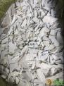 PVC国标塑钢破碎料