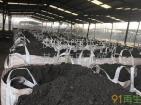 各种碳化硅废料,硅废料!废碳化硅砖废磨料沉池滤饼离心料!金刚线切割硅泥,打磨硅粉,各种化工硅粉