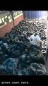 收购  钨钴 硬质合金