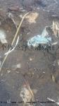 氧化皮,铁粉(东莞自提400元/吨)