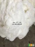 求购PET涤纶废丝,网络丝,开刀丝,大化棉纱,大化无纺布,弹丝