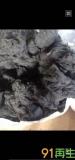 供应涤纶PET短纤维