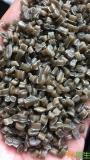 供应PE高低压膜颗粒(高低压混合造粒)