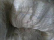 供应纯棉纱布、擦机布