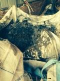 求购金川钴板,钴片,钽,铌料,珞板,钴珞钨,钴珞钼,人体关节,无磁无钴合金尺子,等有色金属