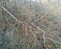 供应树枝破碎细粒