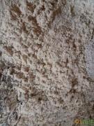 供应纯杉木砂光粉