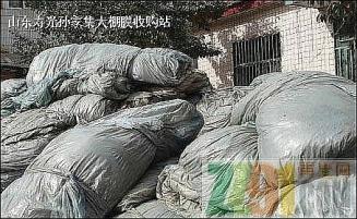 供应PVC大棚膜毛料