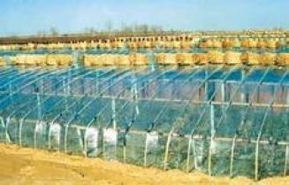 供应PVC大棚膜,PVC毛料