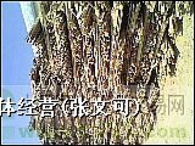 供应废木材_废木材图片相册-zz91再生网
